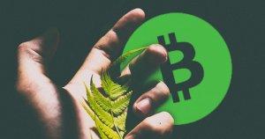 bitmain holds btc cash social