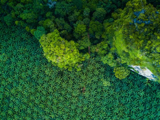Blockchain May Resolve Palm Oil Problems 6