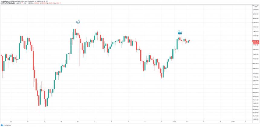 bitcoin whale btc