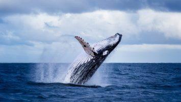 whale 768x432 1